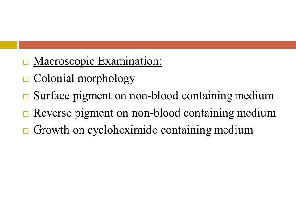 Macroscopic Examination:
