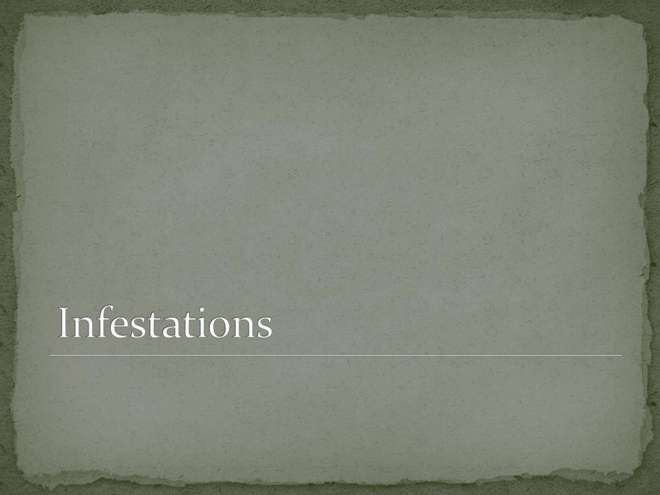 Infestations