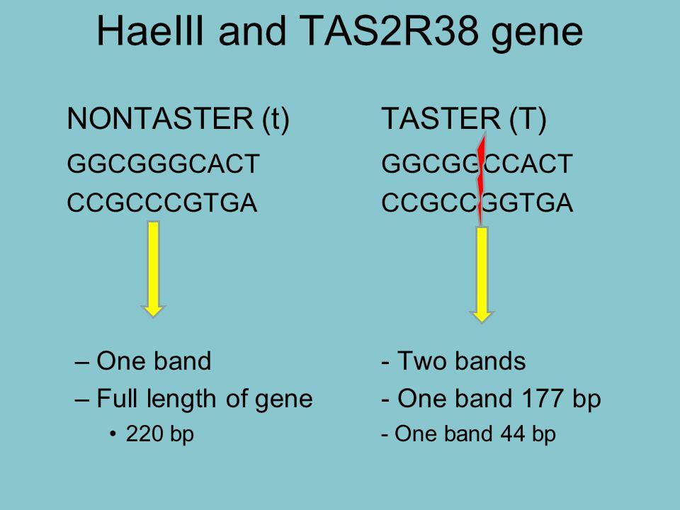 HaeIII and TAS2R38 gene NONTASTER (t) TASTER (T) GGCGGGCACT GGCGGCCACT
