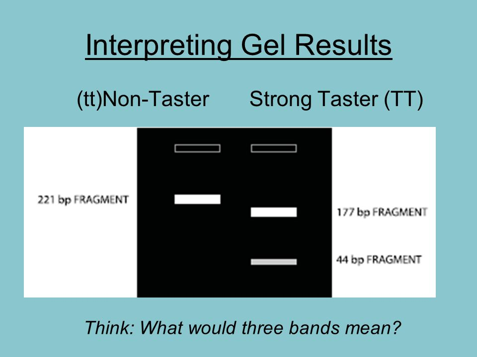 Interpreting Gel Results