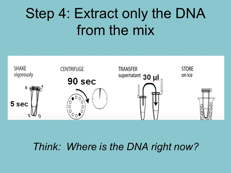 Step 4: Extract only the DNA from the mix