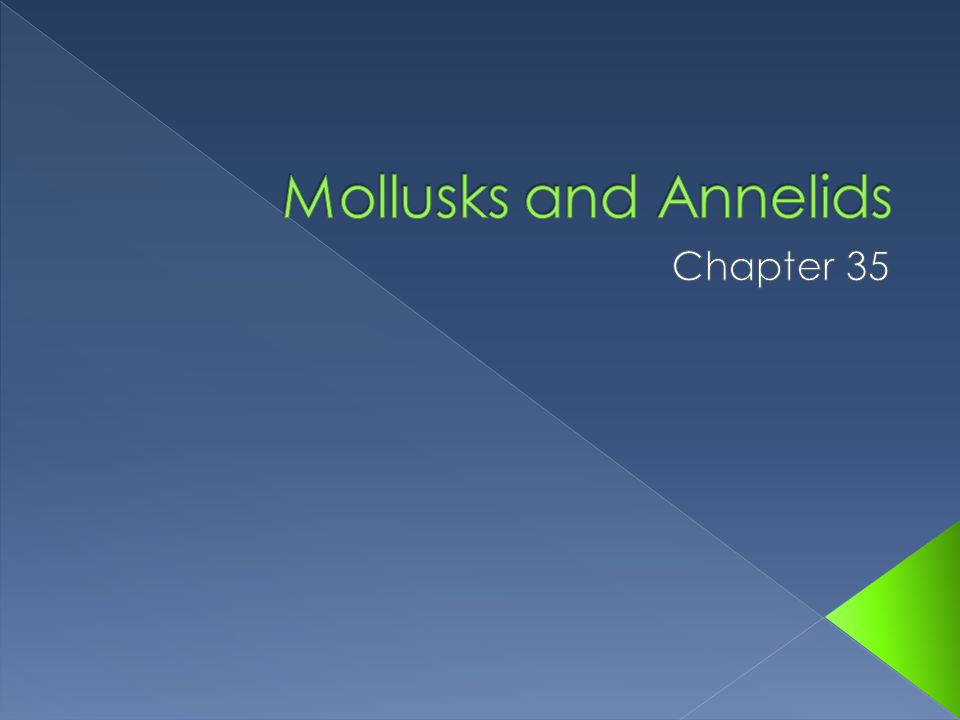 Mollusks and Annelids Chapter 35