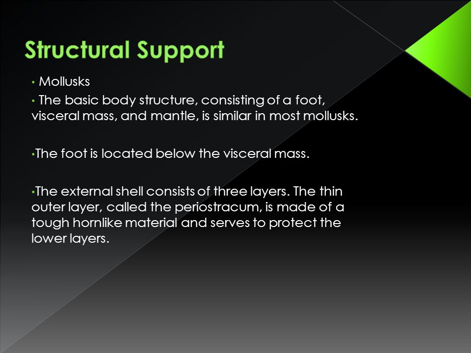 Structural Support Mollusks