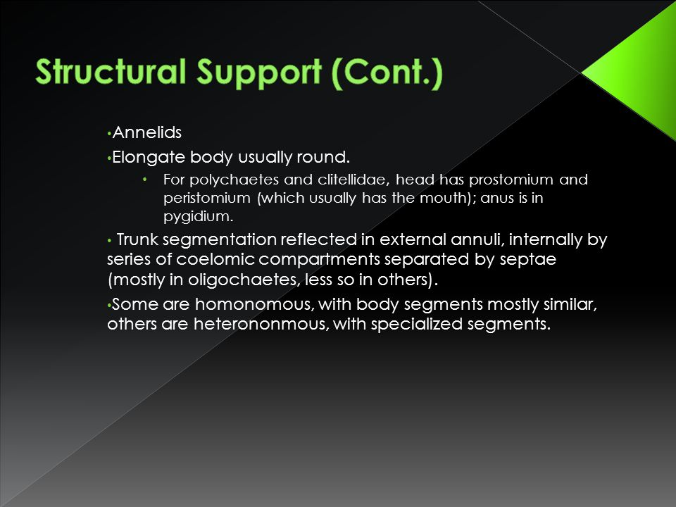 Structural Support (Cont.)