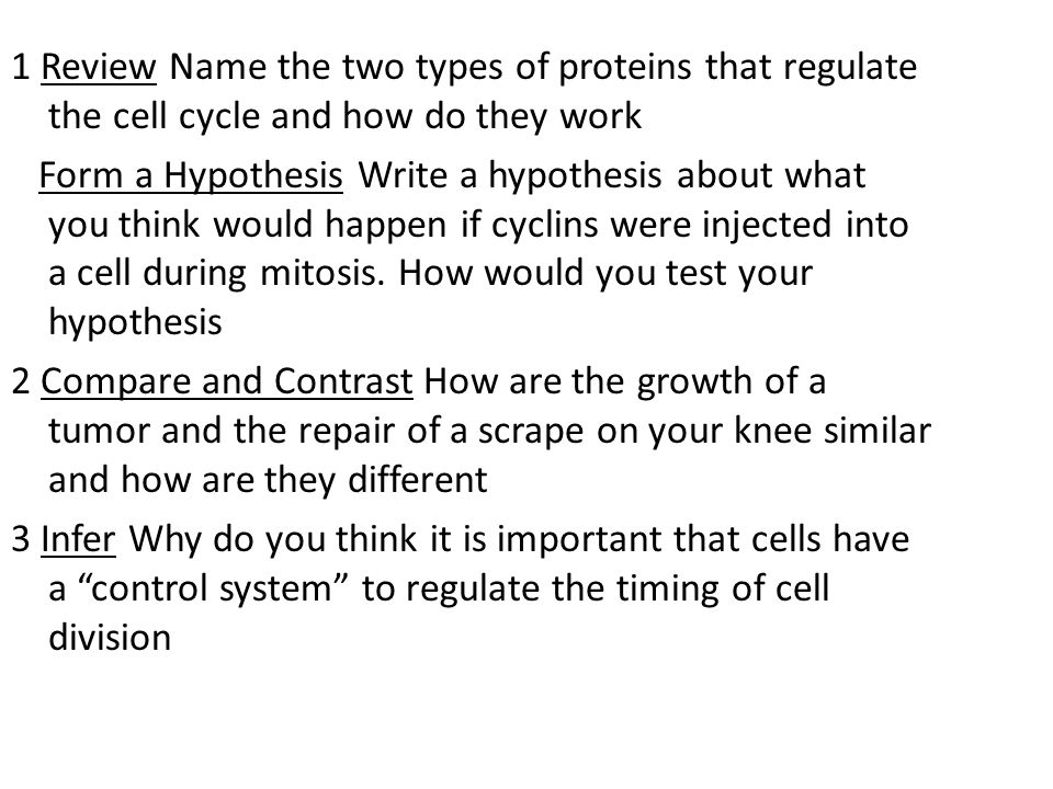 1 Review Name the two types of proteins that regulate the cell cycle and how do they work Form a Hypothesis Write a hypothesis about what you think would happen if cyclins were injected into a cell during mitosis.