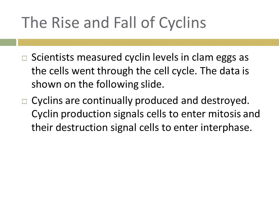 The Rise and Fall of Cyclins