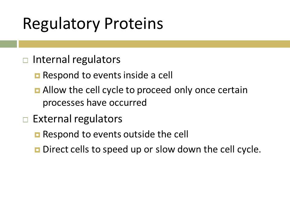 Regulatory Proteins Internal regulators External regulators
