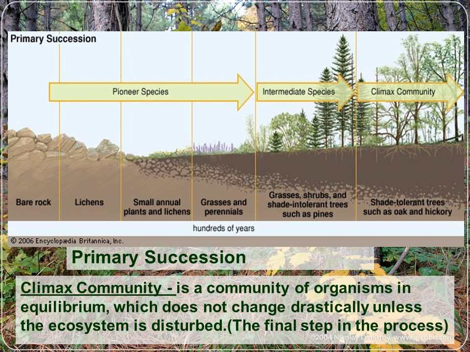 Primary Succession