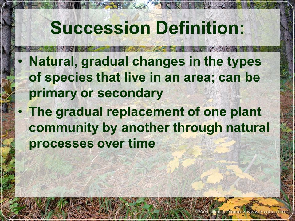 Succession Definition: