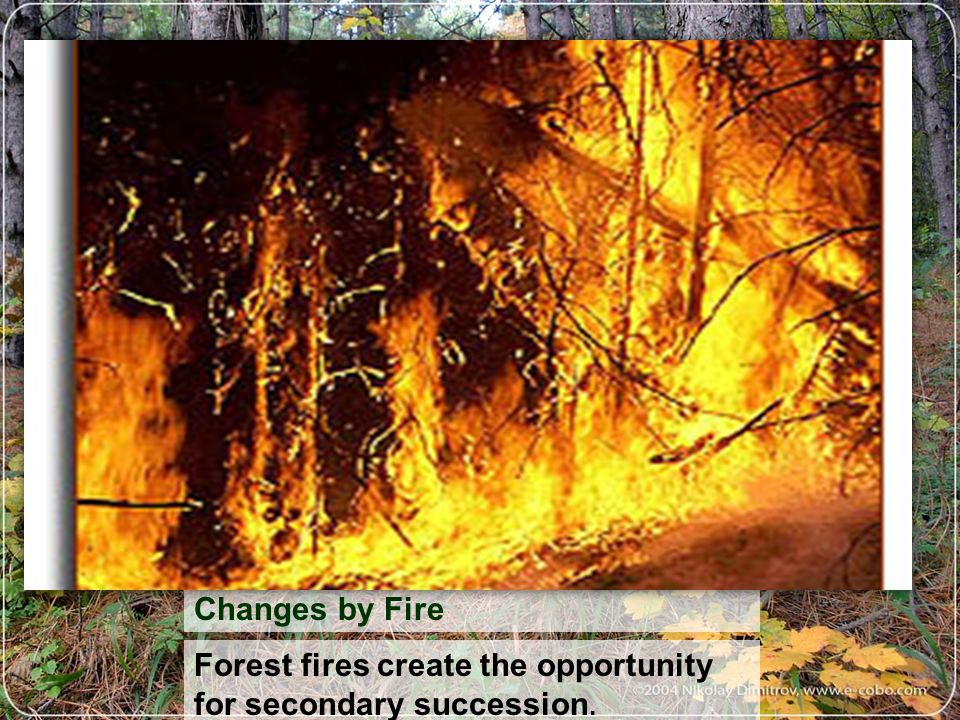 Forest fires create the opportunity for secondary succession.