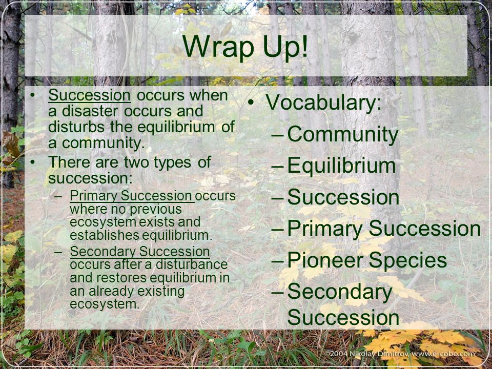 Wrap Up! Vocabulary: Community Equilibrium Succession