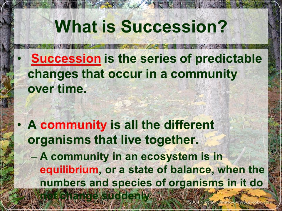What is Succession Succession is the series of predictable changes that occur in a community over time.
