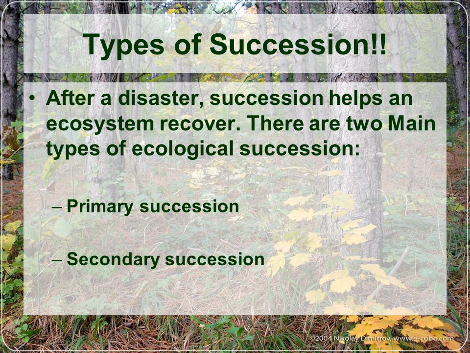 Types of Succession!! After a disaster, succession helps an ecosystem recover. There are two Main types of ecological succession: