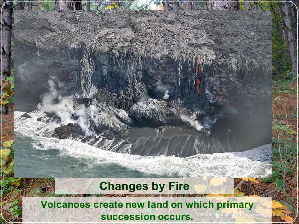 Volcanoes create new land on which primary succession occurs.