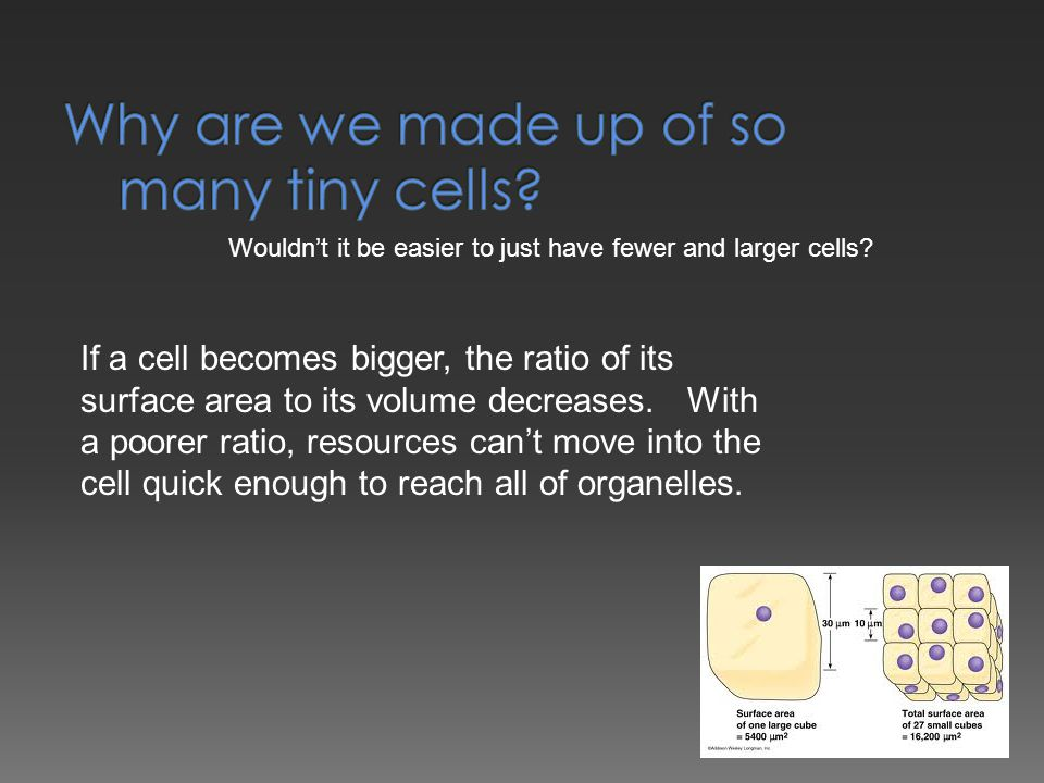 Why are we made up of so many tiny cells