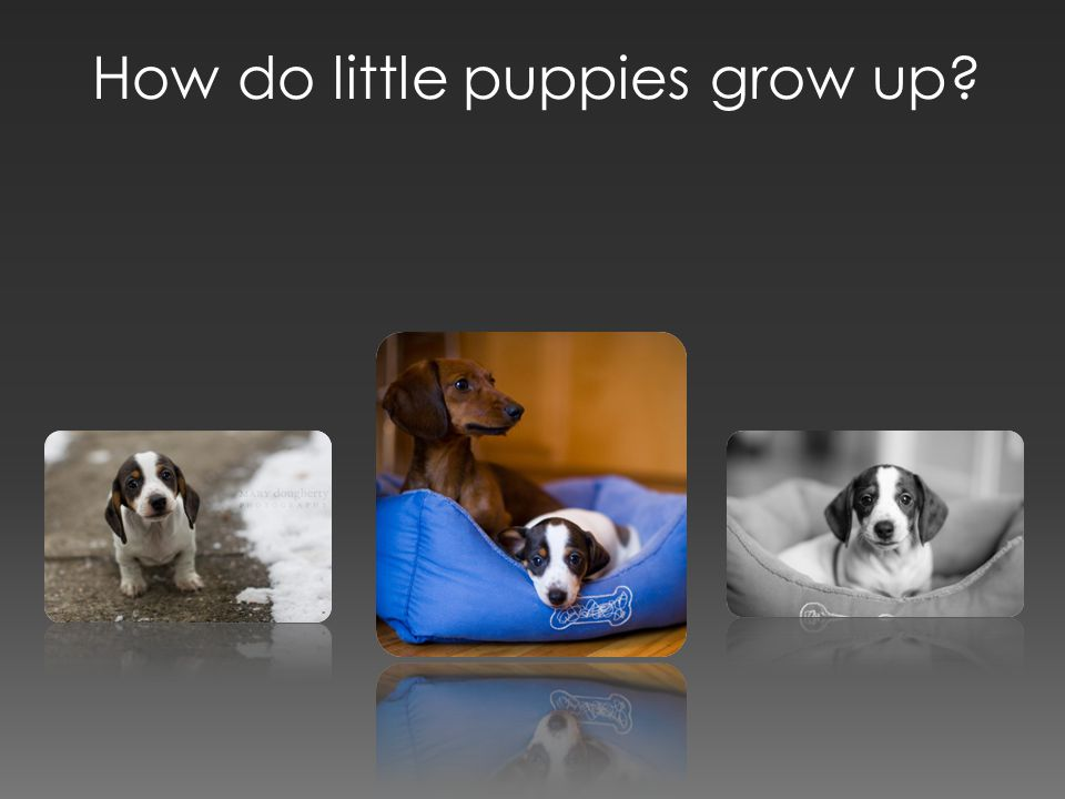 How do little puppies grow up