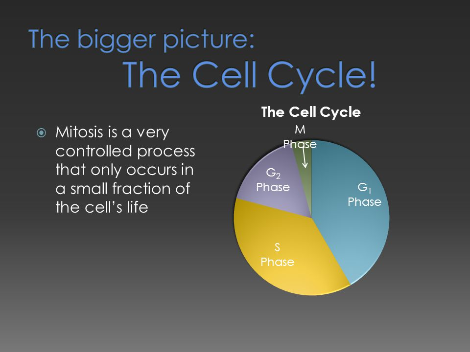 The bigger picture: The Cell Cycle!