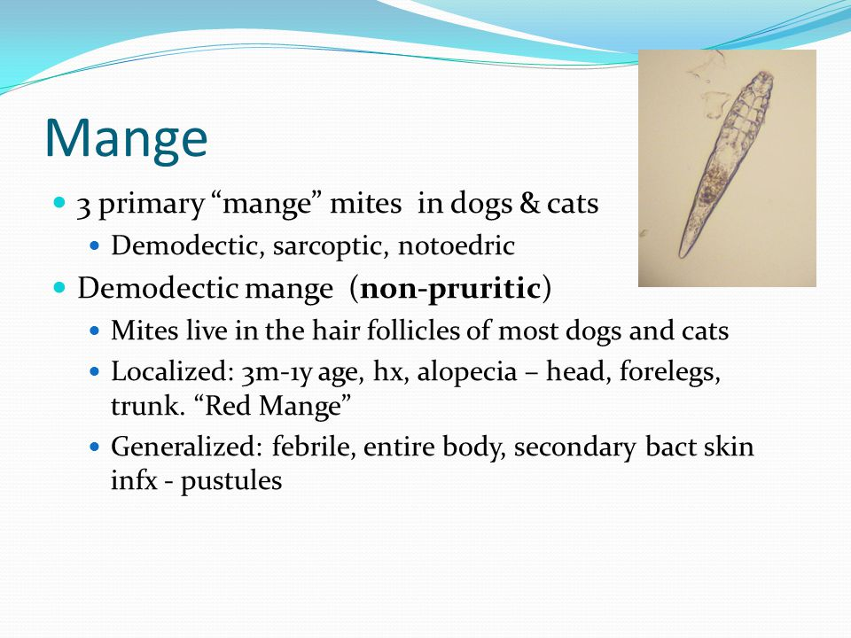 Mange 3 primary mange mites in dogs & cats