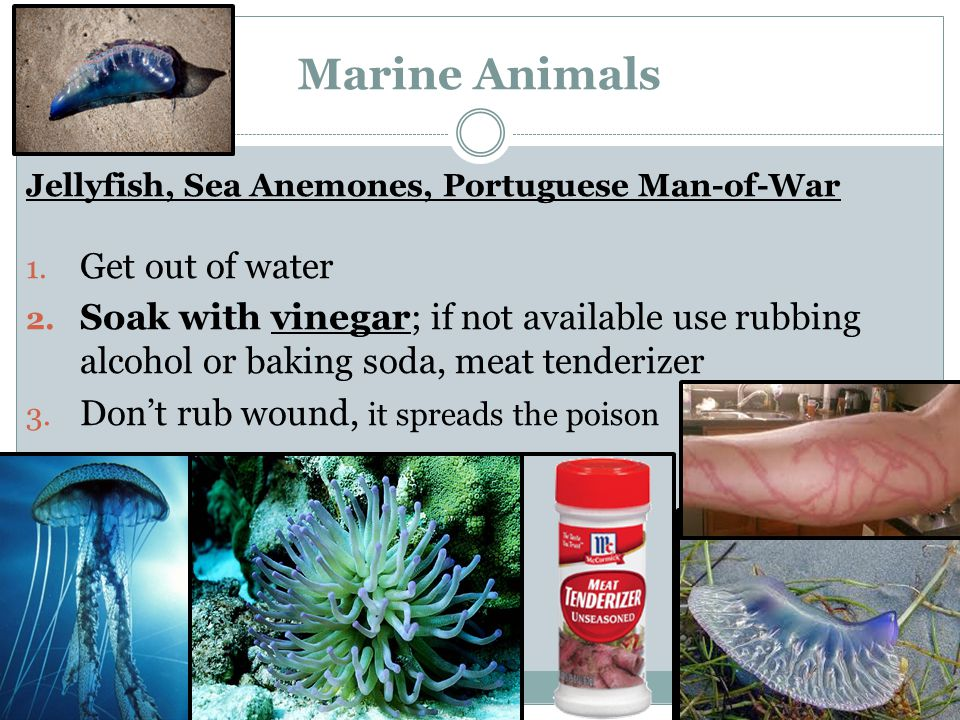 Marine Animals Get out of water
