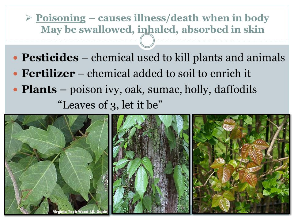 Pesticides – chemical used to kill plants and animals