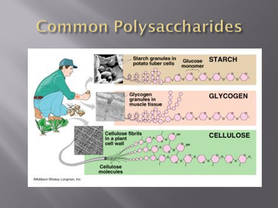 Common Polysaccharides