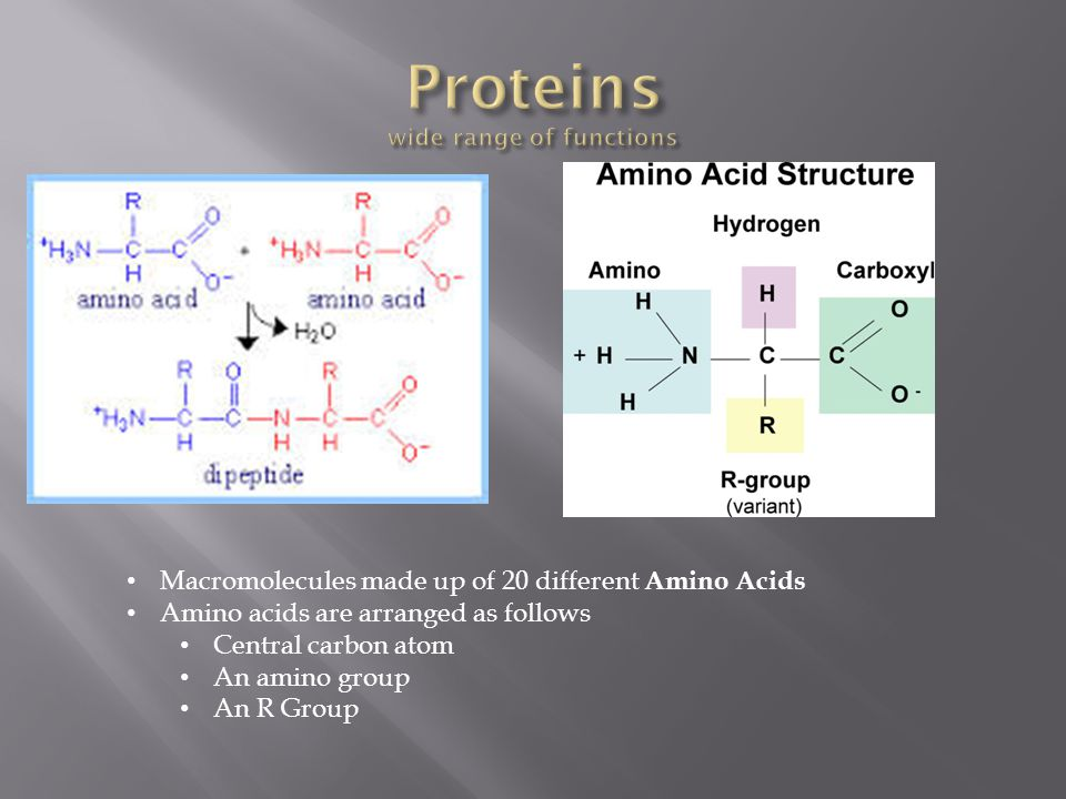 Proteins wide range of functions