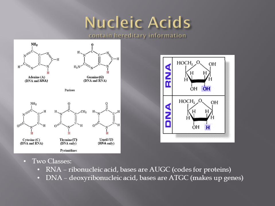 Nucleic Acids contain hereditary information