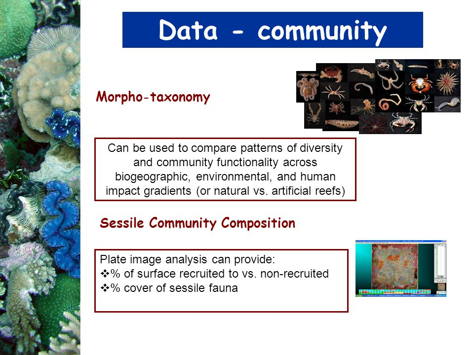 Data - community Morpho-taxonomy Sessile Community Composition