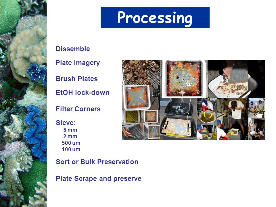 Processing Dissemble Plate Imagery Brush Plates EtOH lock-down