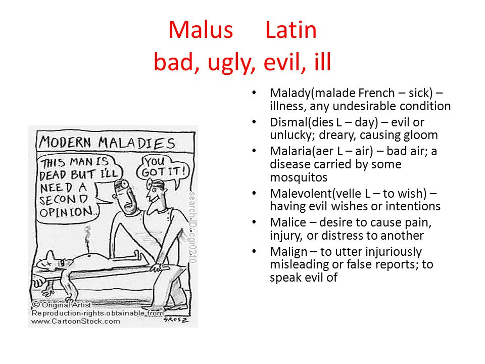 Malus Latin bad, ugly, evil, ill