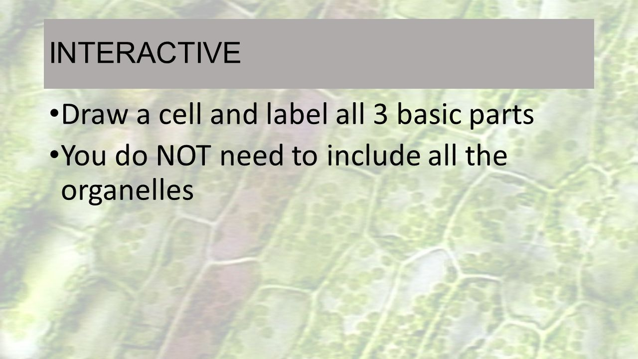 Draw a cell and label all 3 basic parts