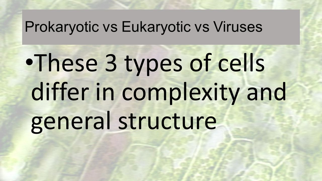 Prokaryotic vs Eukaryotic vs Viruses