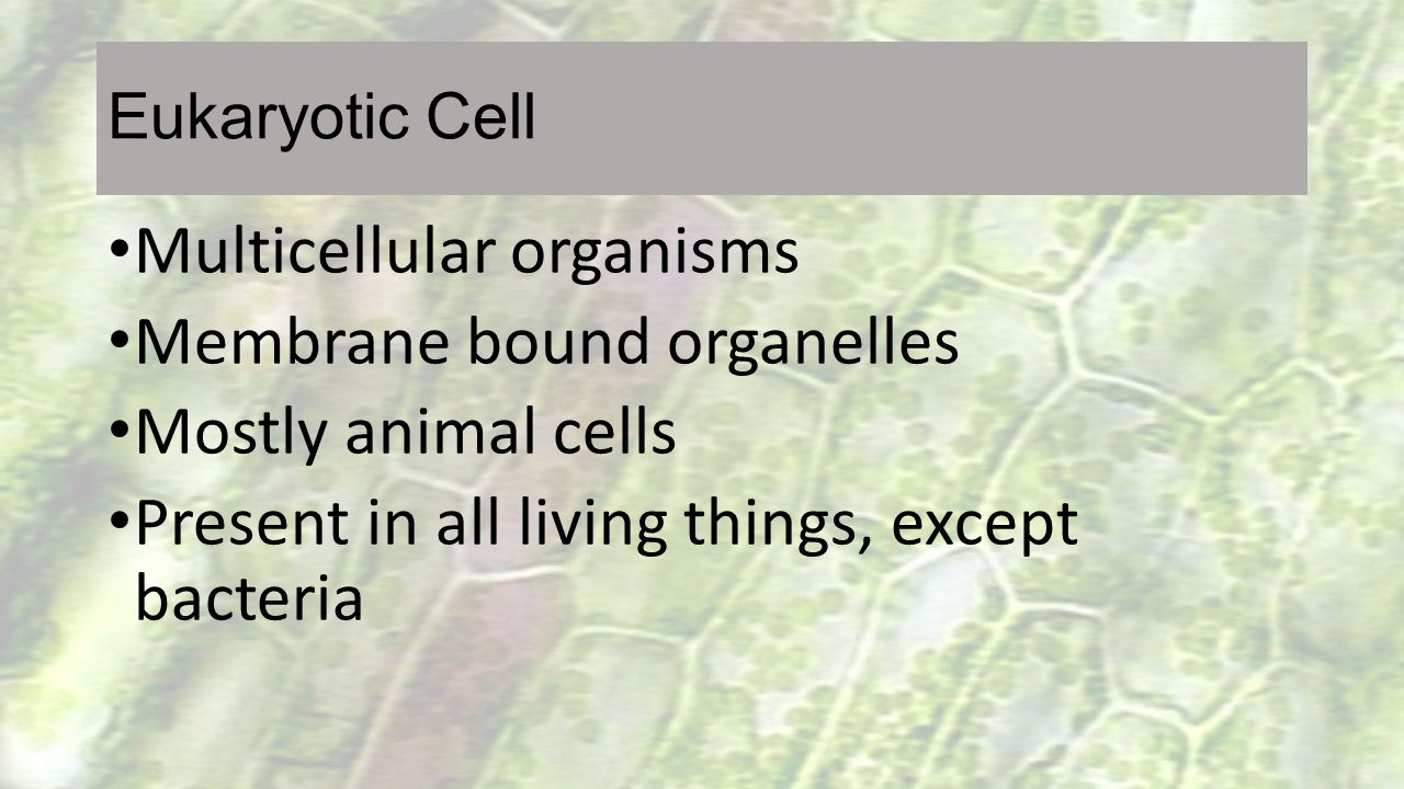 Multicellular organisms Membrane bound organelles Mostly animal cells