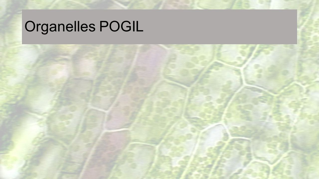 Organelles POGIL