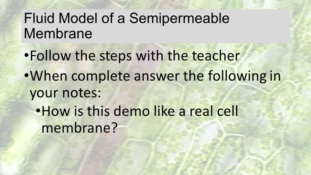Fluid Model of a Semipermeable Membrane