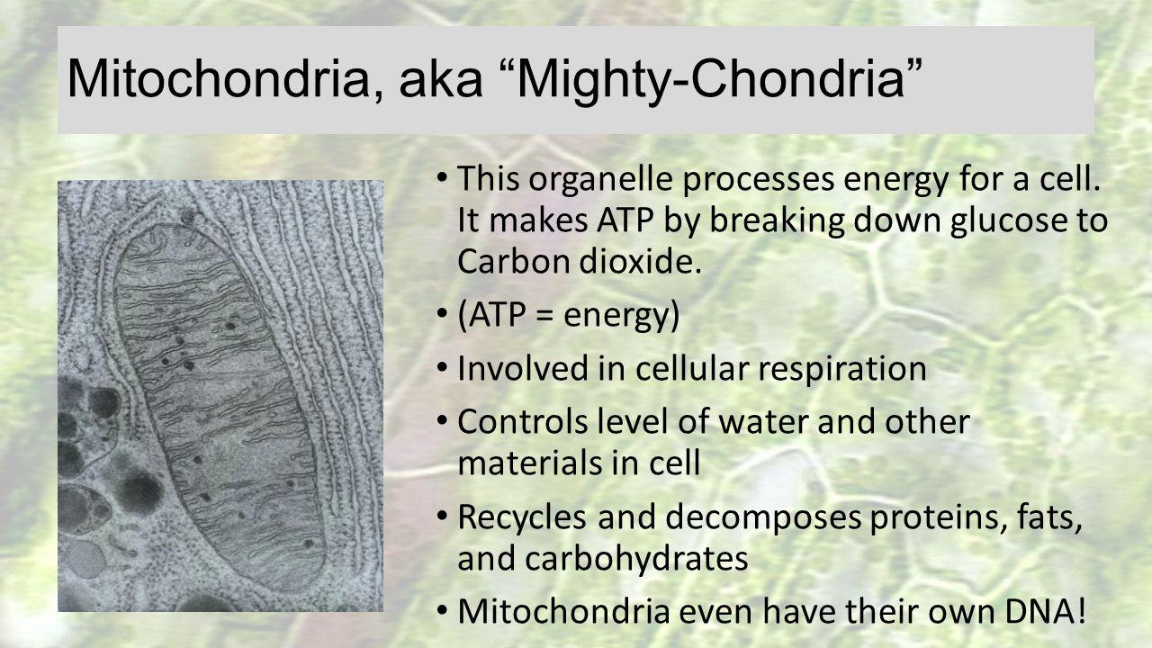 Mitochondria, aka Mighty-Chondria