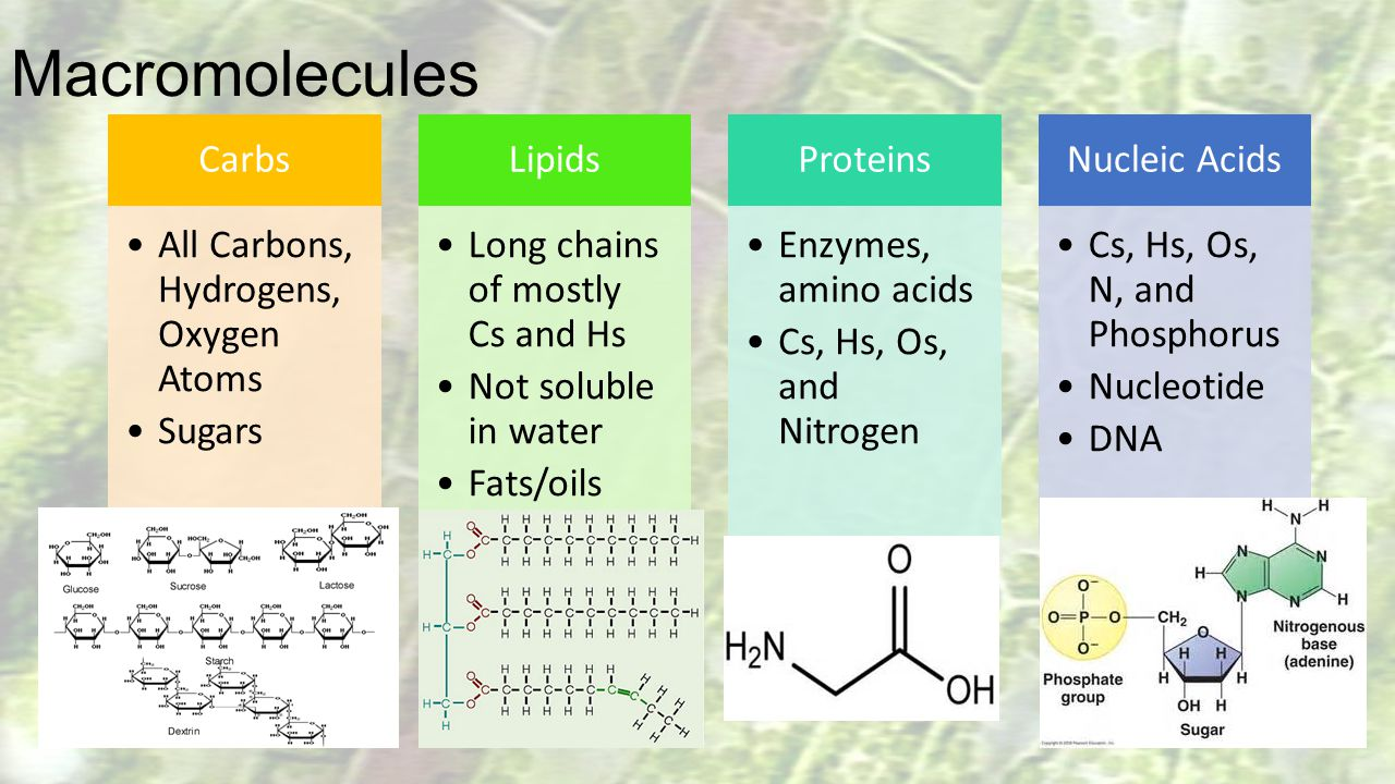 Macromolecules Carbs All Carbons, Hydrogens, Oxygen Atoms Sugars
