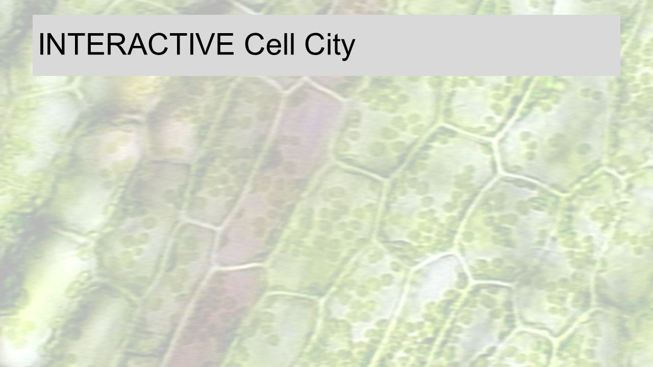 INTERACTIVE Cell City Biology corner w/s