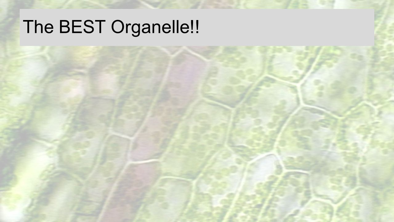 The BEST Organelle!! Competition, p.81