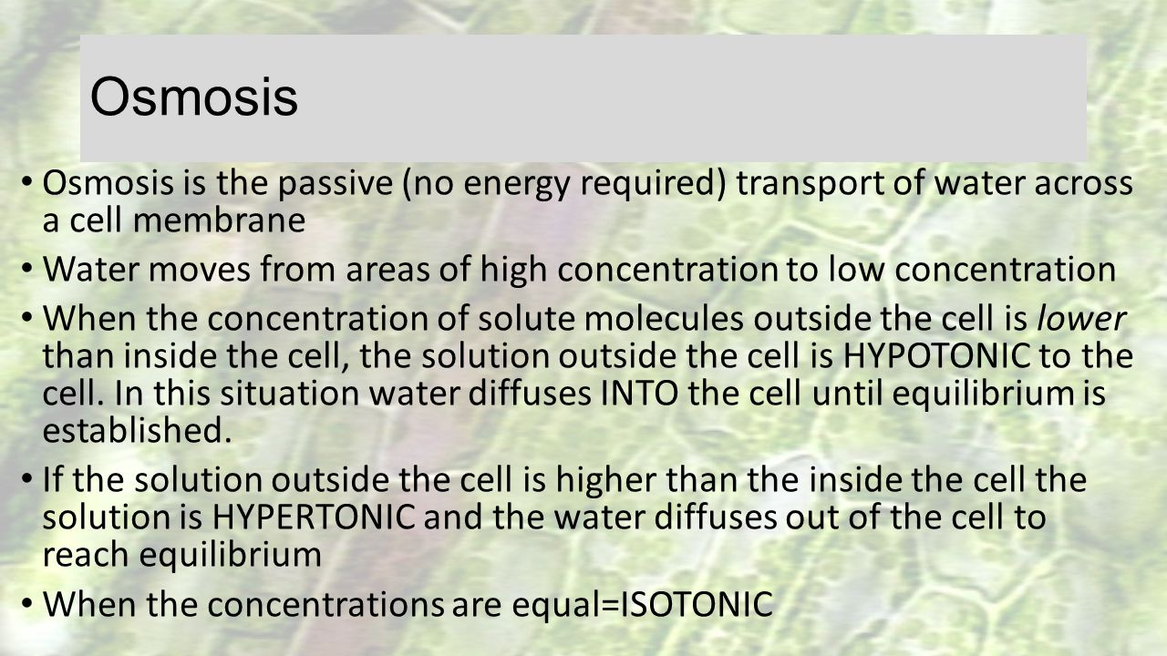 Osmosis Osmosis is the passive (no energy required) transport of water across a cell membrane.