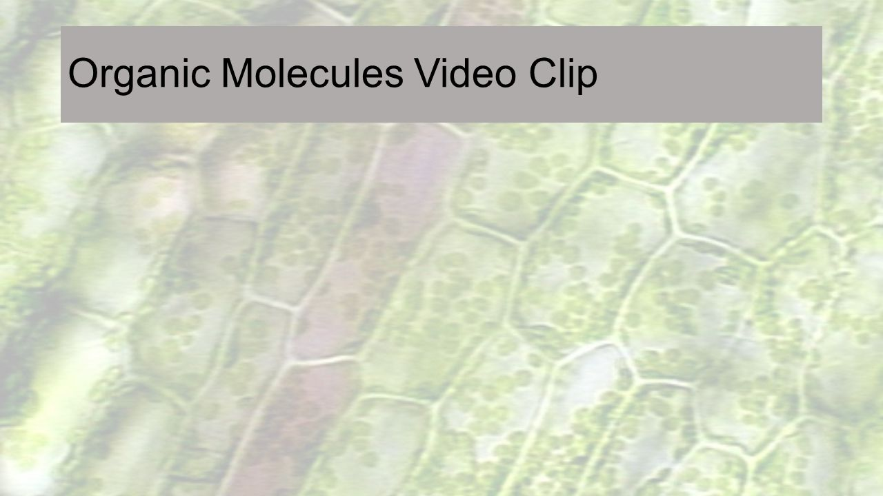 Organic Molecules Video Clip