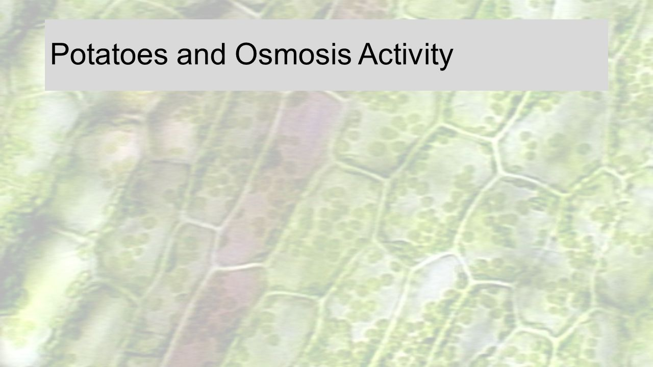 Potatoes and Osmosis Activity
