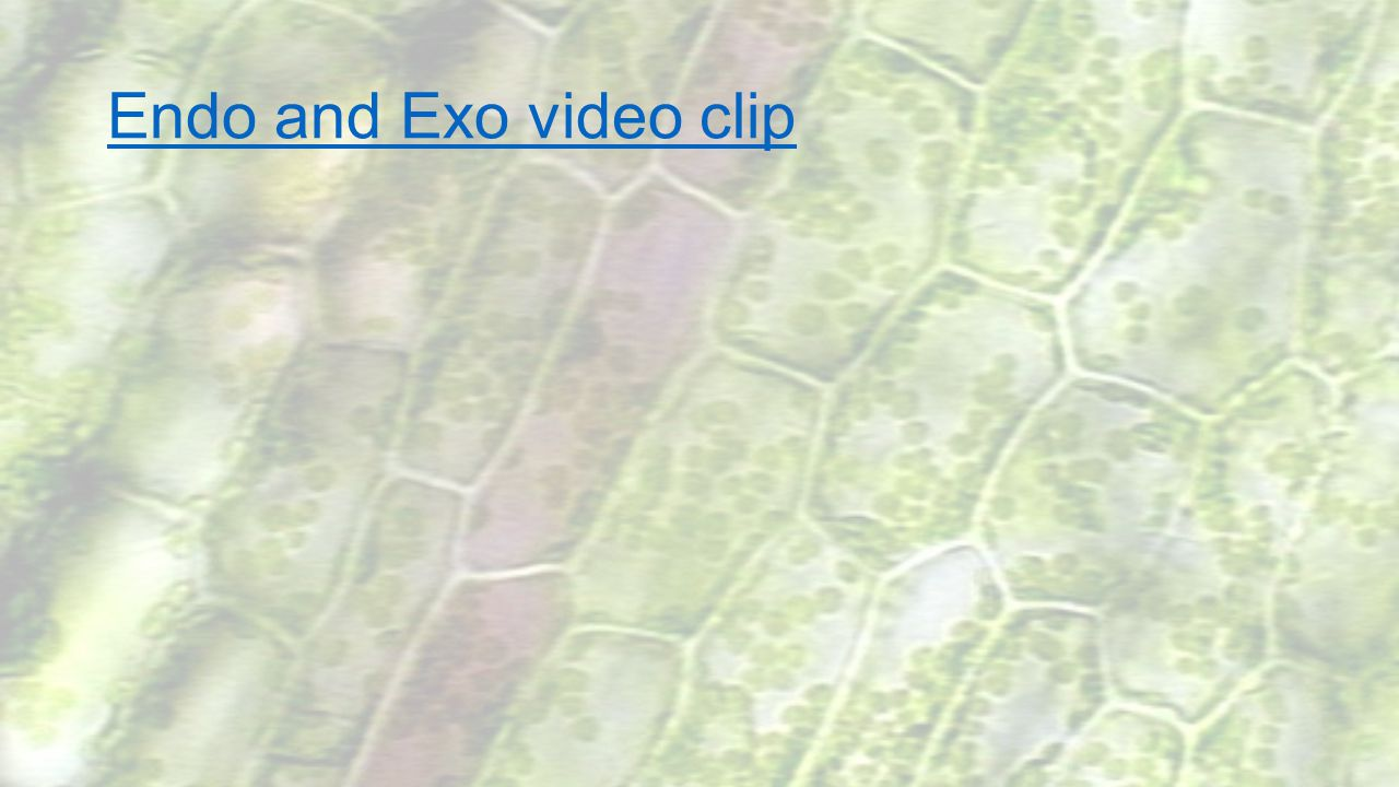 Endo and Exo video clip Under 2 min, youtube