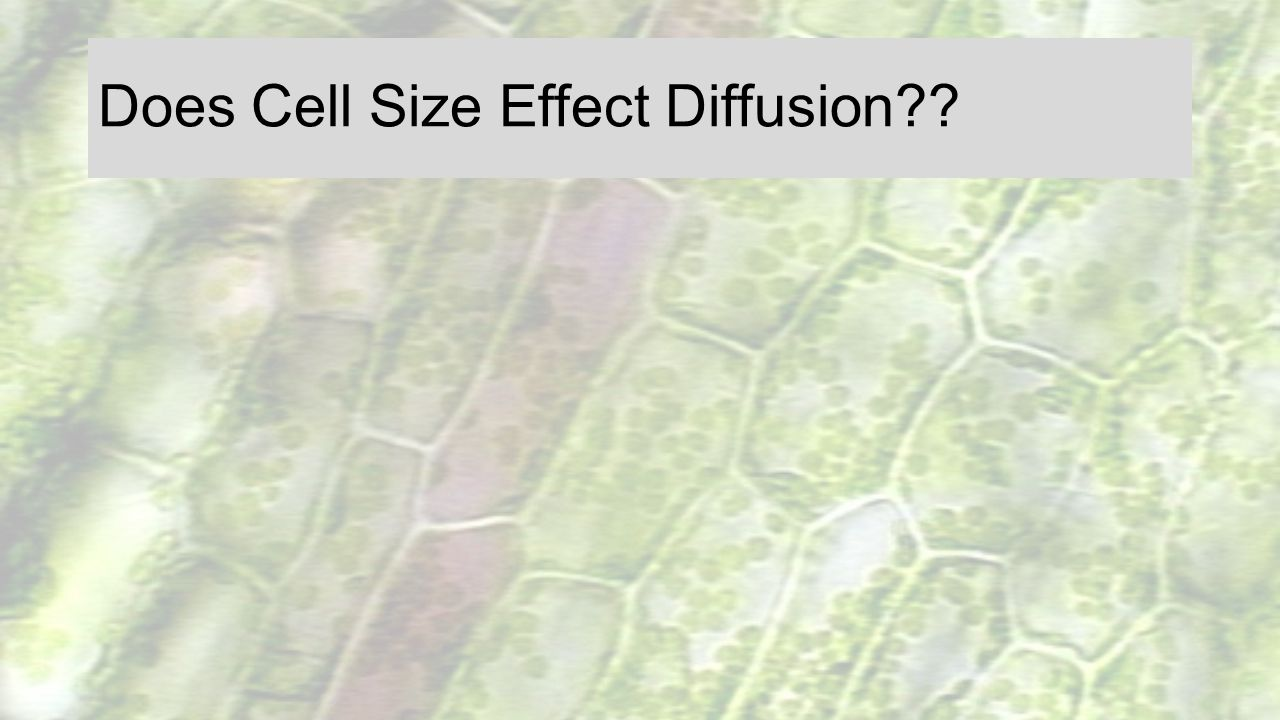Does Cell Size Effect Diffusion
