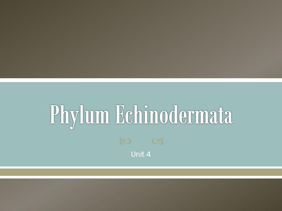 Phylum Echinodermata Unit 4