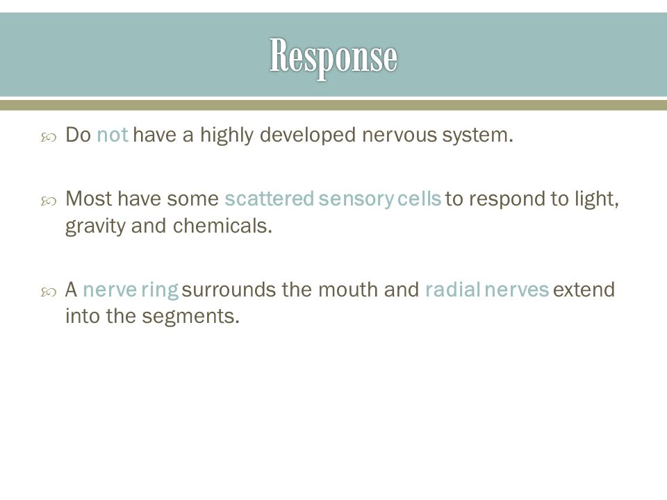 Response Do not have a highly developed nervous system.
