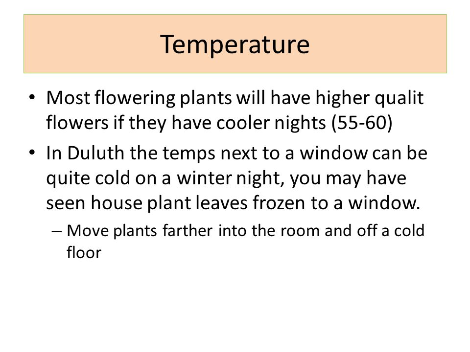 Temperature Most flowering plants will have higher qualit flowers if they have cooler nights (55-60)