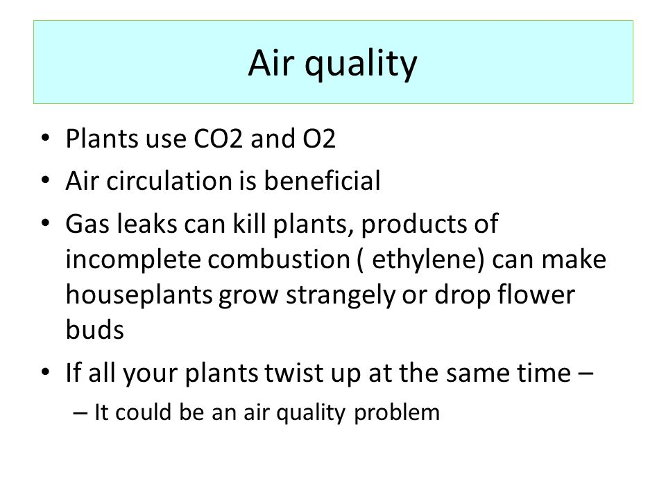 Air quality Plants use CO2 and O2 Air circulation is beneficial