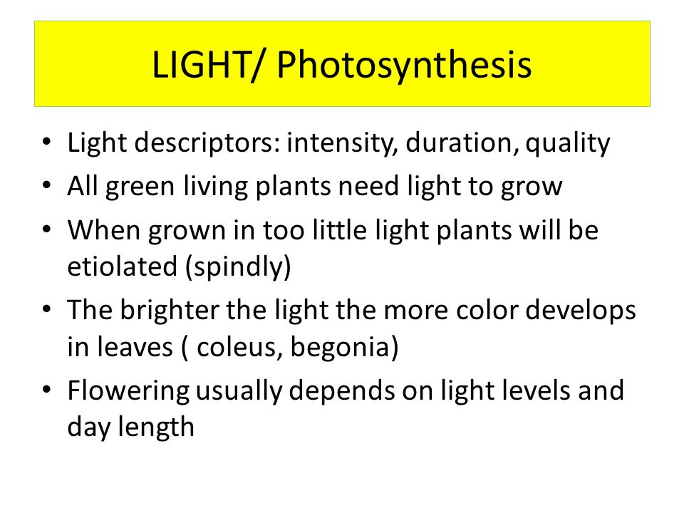 LIGHT/ Photosynthesis