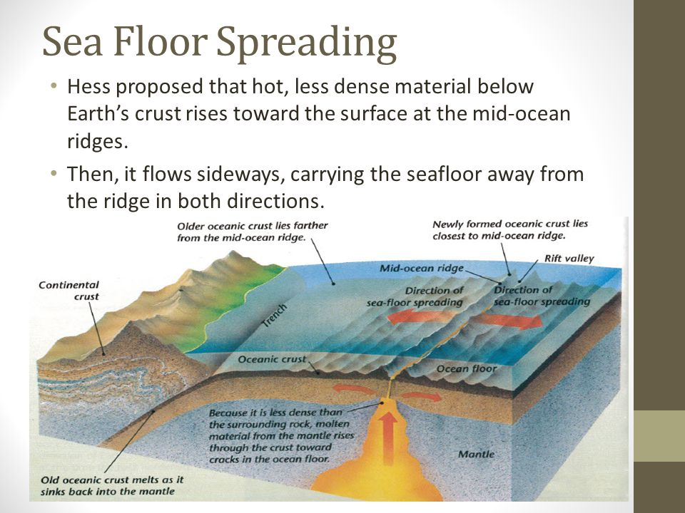 Sea Floor Spreading Hess proposed that hot, less dense material below Earth's crust rises toward the surface at the mid-ocean ridges.